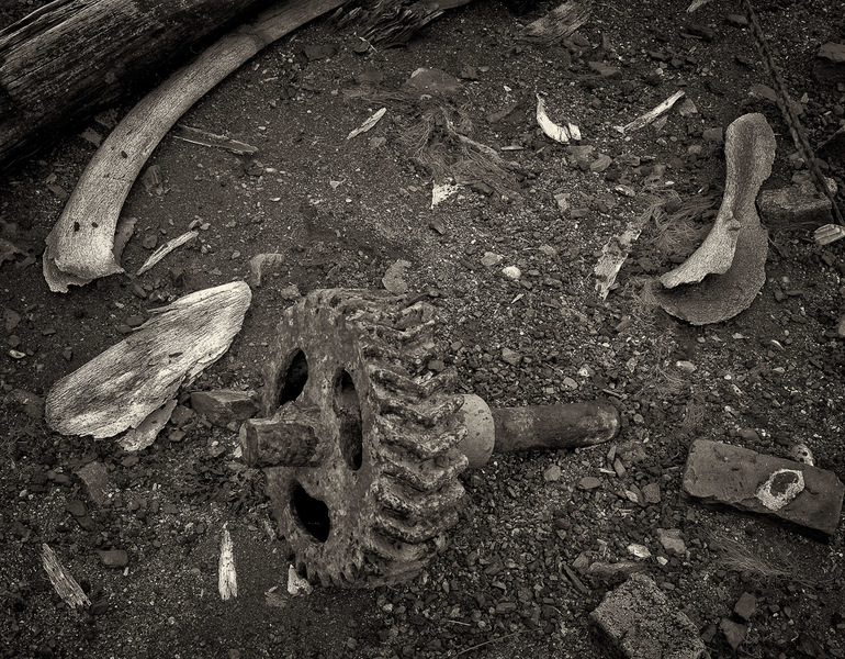 Bone fragments and steel gear in the dirt
