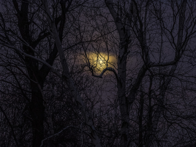 Moon Through Dark Trees
