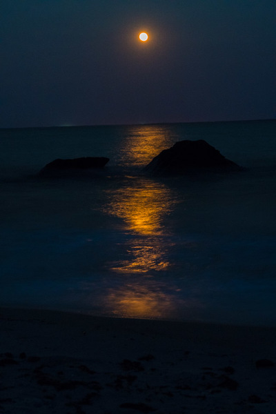 Moonlight in Waves