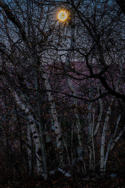 Moonlight, Twilight & Birches
